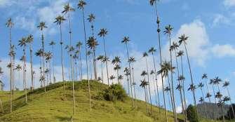 el-paso-del-quindo-y-la-palma-de-cera-patrimonio-cultural-y-ambiental