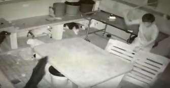 Perros son maltratados por sujeto que ingresó a robar Fundamor Calarcá