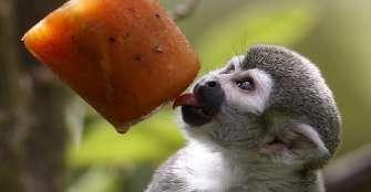 En zoológico de Medellín, animales recibieron helados para mitigar el calor