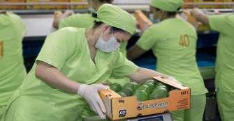 Este martes, Green SuperFood dará apertura a su nueva planta