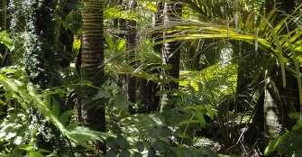 """Los árboles de la Amazonía son """"cápsulas del tiempo"""", según un nuevo estudio"""