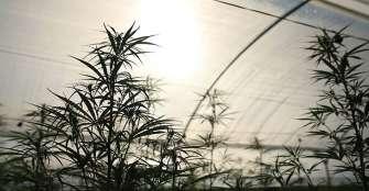 """""""Cannabis debe pensarse hacia la innovación y la ciencia"""""""