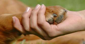 ¿Cómo afrontar la muerte de una mascota?