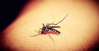 Enfermedades por mosquitos crecerán un 3% para el 2050 por el cambio climático