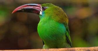 Aves, la fauna más identificada del departamento