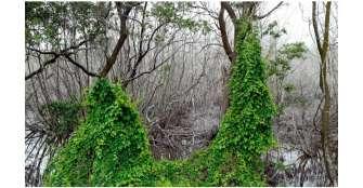 ordenan-a-la-presidencia-proteger-isla-reserva-de-la-biosfera