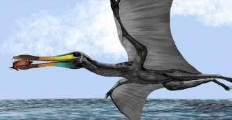 Descubren  fósiles de reptil volador de hace 135 millones de años en Santander