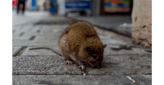 Los cambios en el uso de la tierra aumentan el riesgo de brotes de enfermedades zoonóticas