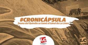 #Cronicápsula | La fauna del Quindío se tomó el túnel de La Línea
