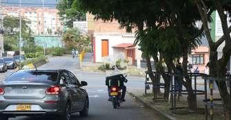 Ante daños o perjuicios por accidentes con árboles, alcaldía debe responder: autoridad ambiental