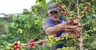 La producción de café de Colombia cae un 9 % en septiembre