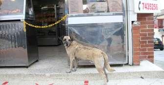 Censo para perros y gatos