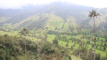 Valle de Cocora, sujeto de derechos, entidades deben tomar acciones