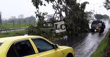 Caída de árbol bloquea el tránsito vehicular por la Centenario