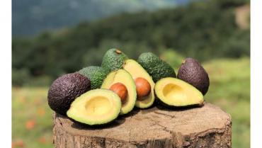 Green SuperFood, una multinacional que desde el Quindío expande sus productos por el mundo