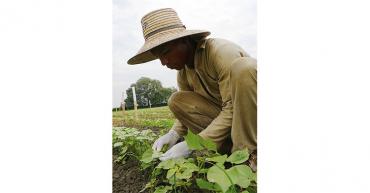 Lanzan aplicación gratuita de capacitación para mejorar prácticas agrícolas