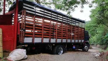 Camión con 66 cerdos, hurtado en Circasia, fue recuperado en Bugalagrande