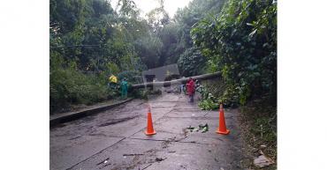 Inundaciones y caída de árboles en Armenia tras intensa lluvia