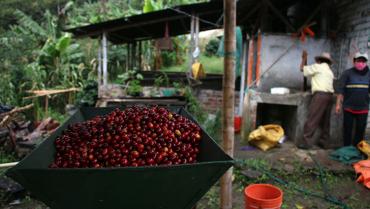 Inversión de $10.800 millones para hacer del Quindío un 'jardín de cafés especiales'