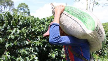 colombia-incrementa-en-3-produccion-y-exportacion-de-cafe-en-enero