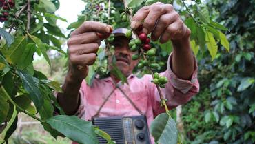 Por La Niña, Federación proyecta reducción en la producción cafetera