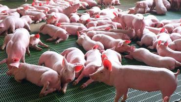 Porcicultores expresaron su preocupación por la reforma tributaria