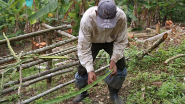 Líderes de sustitución de cultivos sufren más violencia desde paz en Colombia