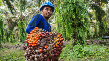 la-produccion-sostenible-de-aceite-de-palma-una-de-las-apuestas-de-colombia