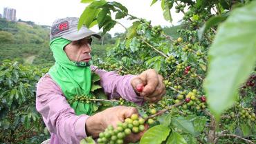 Los caficultores colombianos pierden clientes en el exterior por los bloqueos