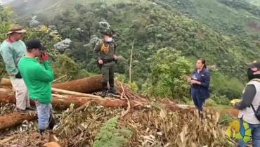 Una persona sancionada por tala de árboles en Génova