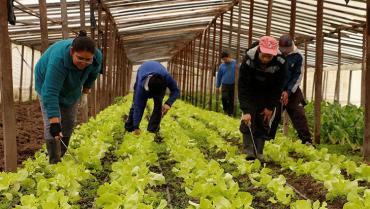 Ley de alivios financieros cobija a productores del Quindío