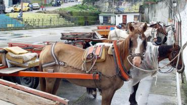 Vehículos de tracción animal serán prohibidos en Colombia