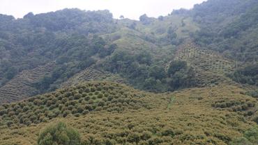Megaminería y cambio de uso de suelos, grandes amenazas contra el PCC