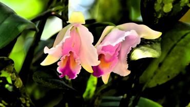 5-especies-de-flora-amenazadas-en-el-quindio