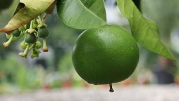 Agricultura, en aprietos por las lluvias; los precios de los alimentos aumentarían