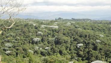 Vivero municipal de Filandia, con historia en la reforestación local