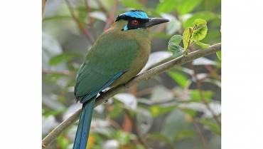 El Barranquero: una de las aves más  bellas de Colombia
