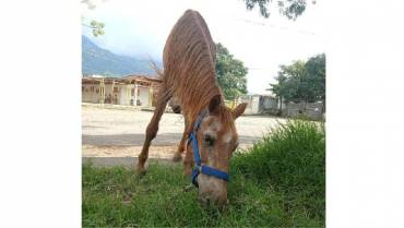 ¿Adoptaría un animalito con alguna discapacidad?