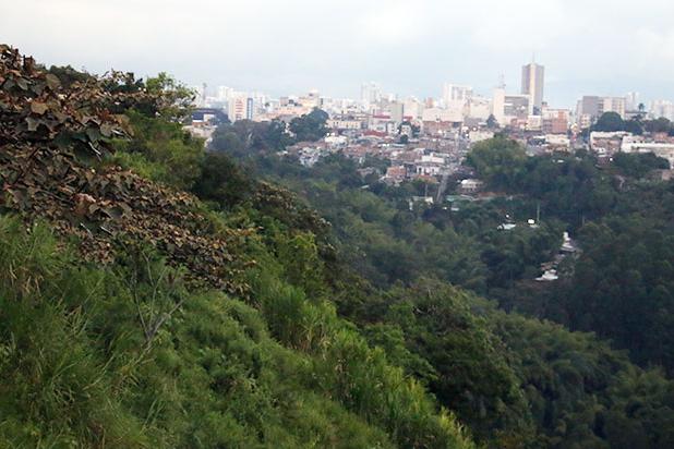 Avenida Los Guayacanes